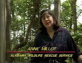 Anne Miller on Discovering Alabama in 1989